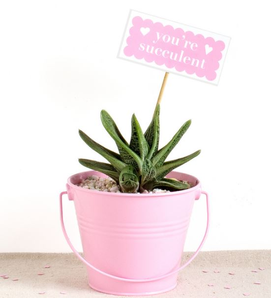 Succulent gift idea from Thousand Oaks storage team